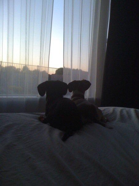 Pawley & Maddie Romantic