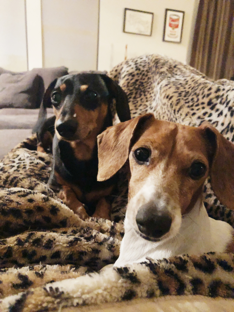 Pawley and Maddie
